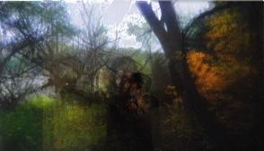 la double vie des arbres